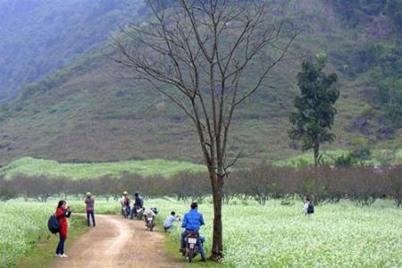 Các bạn trẻ rất thích đi Mộc Châu bằng xe máy. Nguồn Internet.