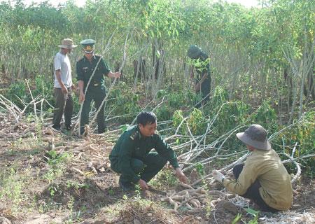 Hướng dẫn kỹ thuật nông nghiệp cho người dân vùng cao
