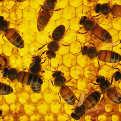 Mật ong: Thêm nhiều công dụng chưa ai biết 1