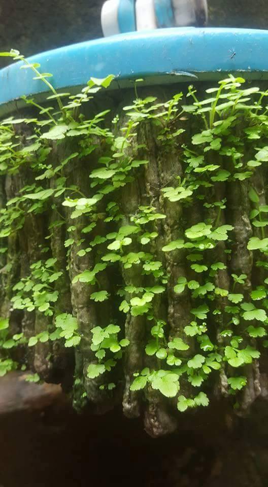 Khi lười biếng lên đỉnh vinh quang, chổi lau nhà cũng mọc được cây - Ảnh 1.