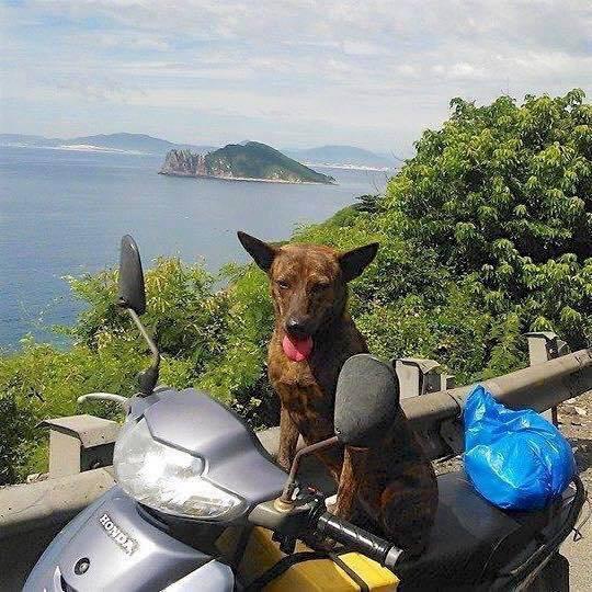 19 ngày nằm phục xin chuộc chó vẫn bị chủ doanh nghiệp HCM từ chối vì sợ mất... Hên - ảnh 2