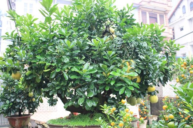 Trước nhà có 1 trong 6 loài cây này, gia đình sẽ tránh được nhiều xui xẻo trong năm - Ảnh 3.