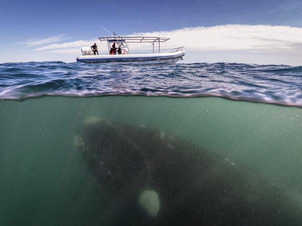 Hội chứng sợ biển: Nỗi ám ảnh kinh hoàng đến từ đại dương! - Ảnh 4.