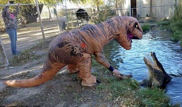 7 ngày qua ảnh: Mạo hiểm giả khủng long để trêu ghẹo cá sấu - Ảnh 5.