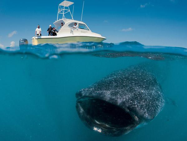 Hội chứng sợ biển: Nỗi ám ảnh kinh hoàng đến từ đại dương! - Ảnh 3.