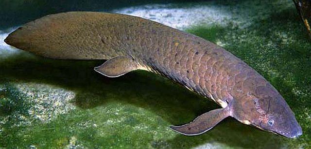 Câu chuyện khó tin về loài cá sống dai nhất thế giới - Ảnh 2.