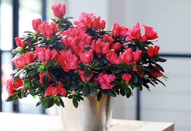 Đắt đến mấy cũng nên mua thêm hoa này đặt trong nhà ngày Tết, tài lộc rủng rỉnh cả năm - Ảnh 2.