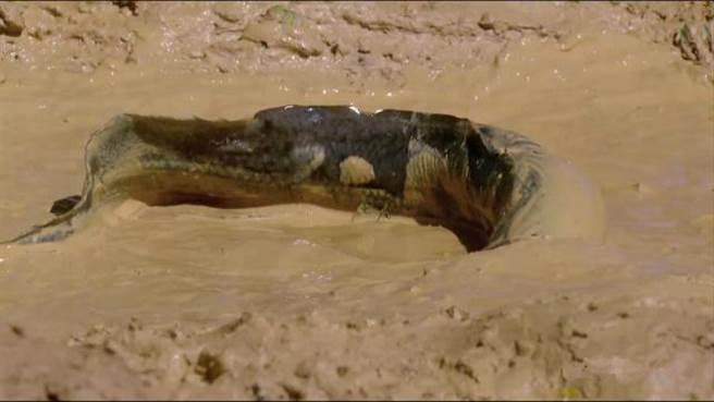 Câu chuyện khó tin về loài cá sống dai nhất thế giới - Ảnh 4.