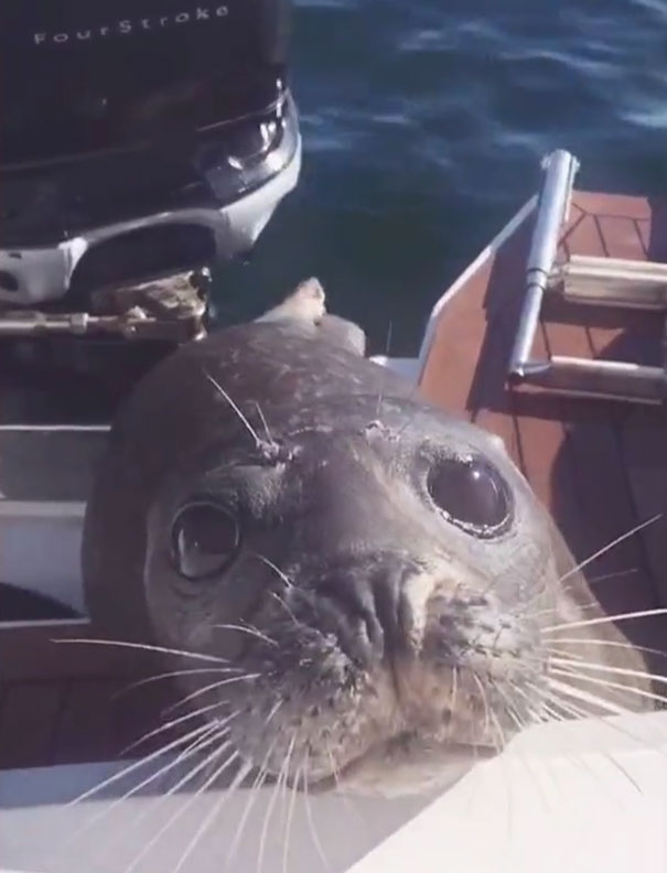 Hành động kỳ lạ giúp hải cẩu sống sót giữa vòng vây cá voi! - Ảnh 6.