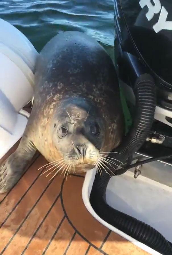 Hành động kỳ lạ giúp hải cẩu sống sót giữa vòng vây cá voi! - Ảnh 7.