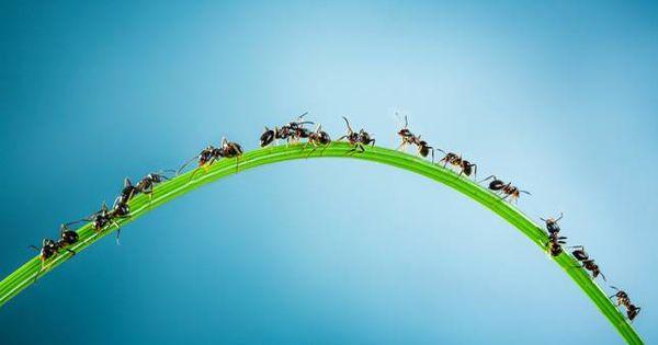Câu chuyện sinh tồn của loài kiến và những điều kẻ yếu cần phải khắc cốt ghi tâm - Ảnh 4.