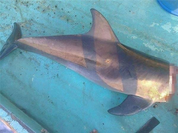 Hình ảnh nhóm thanh niên bắt và giết cá heo khiến dân mạng Việt bức xúc - Ảnh 4.