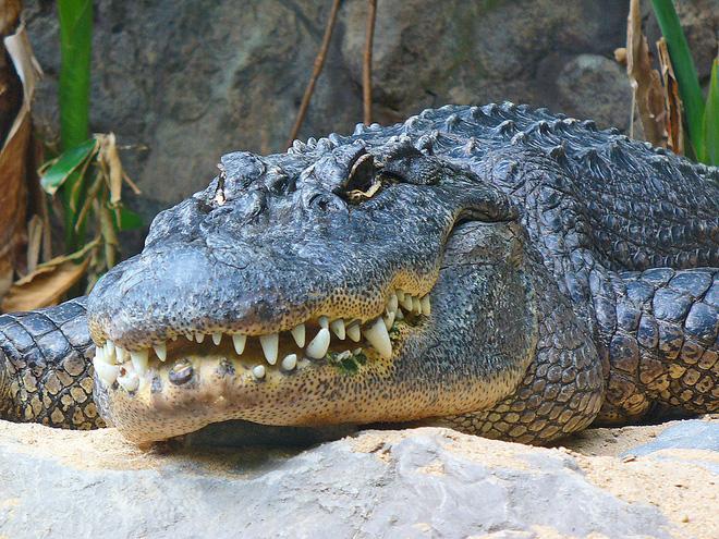 Túng quẫn và đói khát, cá sấu cả gan tấn công voi khổng lồ, rồi... - Ảnh 2.