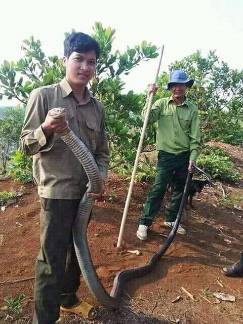 Rùng mình cảnh tay không bắt rắn khủng nặng tới cả chục kg ở Việt Nam - Ảnh 4.
