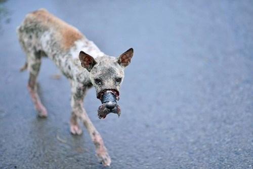Rớt nước mắt với hình ảnh chú chó bị hoại tử mõm sau 1 năm - Ảnh 2.