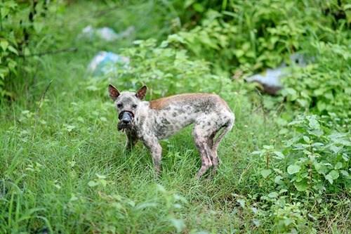 Rớt nước mắt với hình ảnh chú chó bị hoại tử mõm sau 1 năm - Ảnh 1.