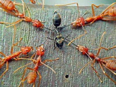 Câu chuyện sinh tồn của loài kiến và những điều kẻ yếu cần phải khắc cốt ghi tâm - Ảnh 1.