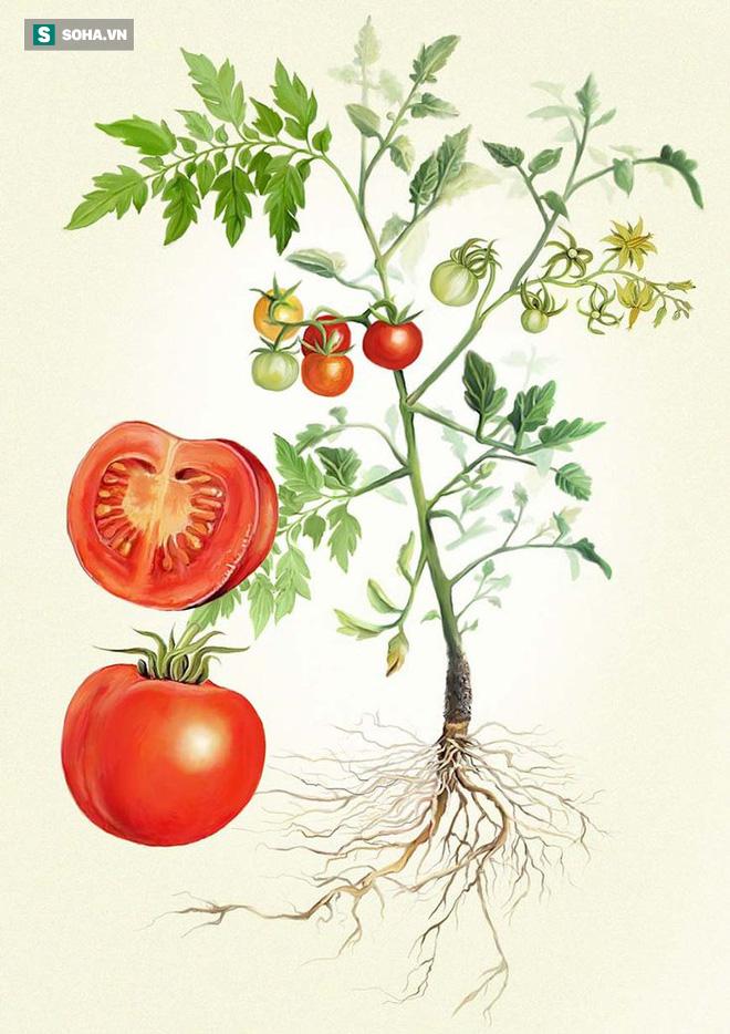 Cảnh giác với 6 loại thực phẩm ăn nhiều một lúc sẽ gây hại cho sức khỏe - Ảnh 3.