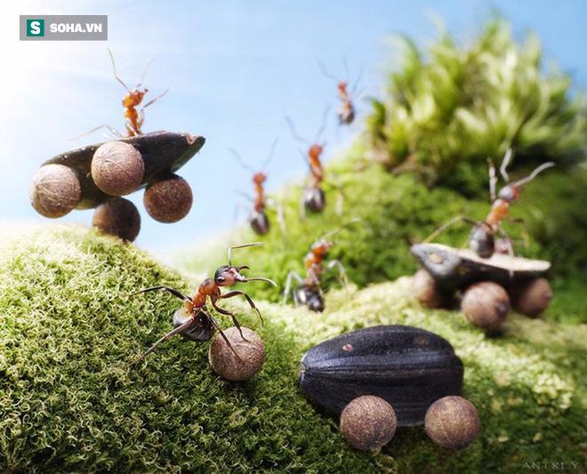 Câu chuyện sinh tồn của loài kiến và những điều kẻ yếu cần phải khắc cốt ghi tâm - Ảnh 5.