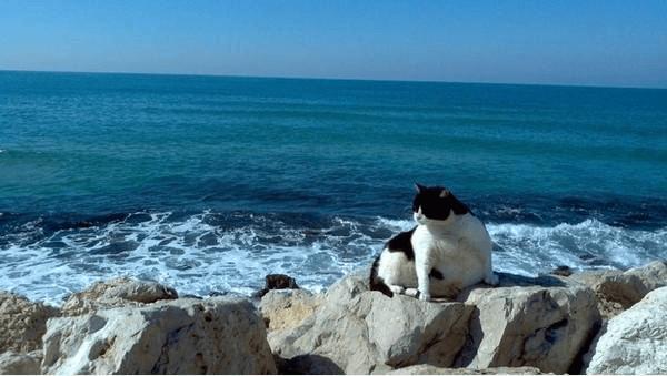 Nước biển cũng là nước mà tại sao không được uống? - Ảnh 3.