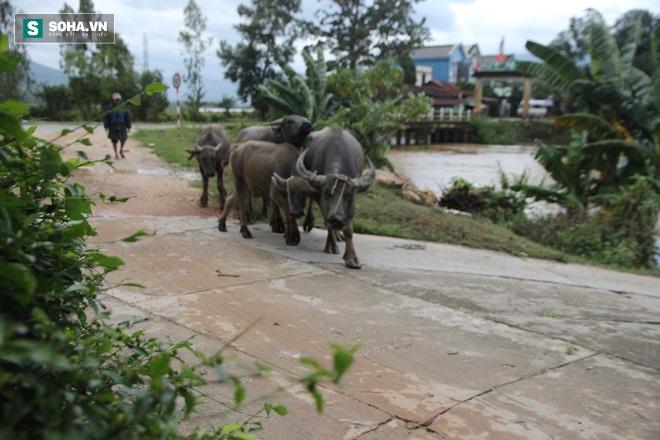 Dân Quảng Nam sơ tán sau khi thủy điện thông báo xả lũ - Ảnh 4.