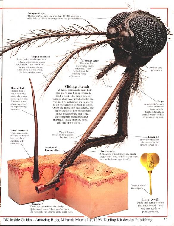 Tại sao bị muỗi đốt lại hay ngứa ngáy, sưng to? - Ảnh 2.