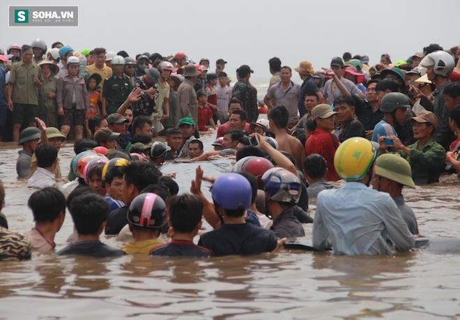 Giải cứu thành công cá voi khủng mắc cạn ở biển Nghệ An - Ảnh 3.