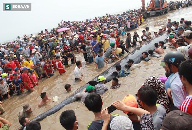 Giải cứu thành công cá voi khủng mắc cạn ở biển Nghệ An - Ảnh 4.
