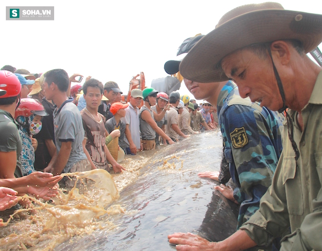 Giải cứu thành công cá voi khủng mắc cạn ở biển Nghệ An - Ảnh 5.