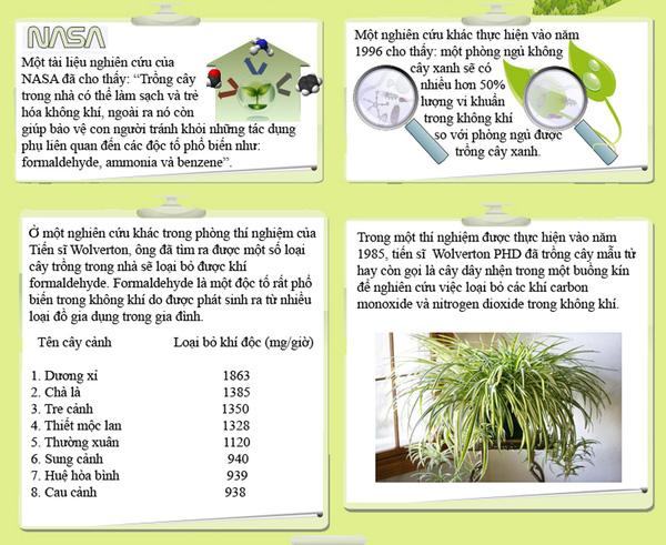7 loại cây lọc thanh không khí nên trồng trong nhà để hỗ trợ sức khỏe - Ảnh 1.