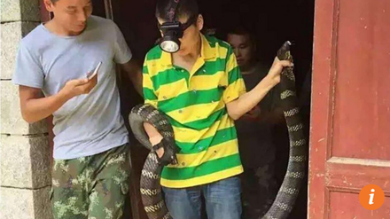 Hãi hùng phát hiện rắn hổ mang khổng lồ trong nhà - Ảnh 1.