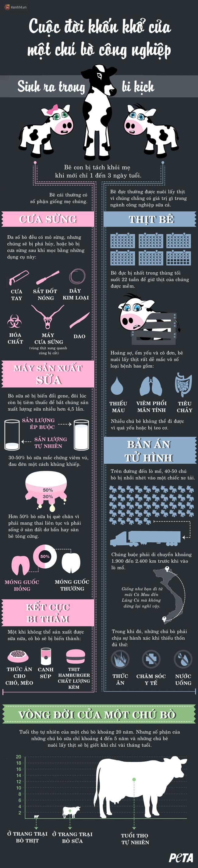 Sinh ra trong bi kịch - sự thật rơi nước mắt về cuộc đời của một chú bò công nghiệp - Ảnh 1.