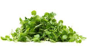 Top 8 thảo dược nên ăn để ngăn ngừa suy giãn tĩnh mạch - Ảnh 1.