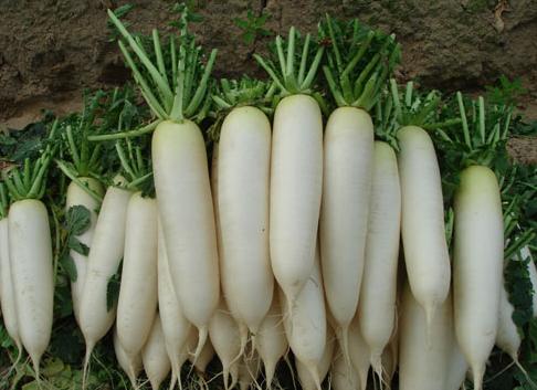 5 thực phẩm kỵ ăn với củ cải trắng vì dễ sinh bệnh - Ảnh 1.
