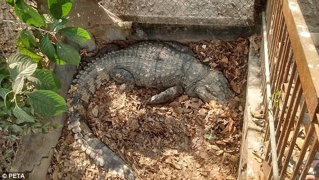 Cảnh tượng rùng mình bên trong một trang trại cá sấu ở Việt Nam lên báo nước ngoài - Ảnh 4.