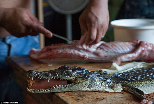 Đằng sau những đôi giày da thời thượng là cả một quá trình lột da cá sấu sống rùng rợn - Ảnh 11.