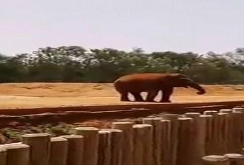 Đi vườn thú, bé gái 7 tuổi bị voi ném đá tử vong - Ảnh 1.