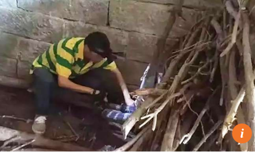Hãi hùng phát hiện rắn hổ mang khổng lồ trong nhà - Ảnh 2.