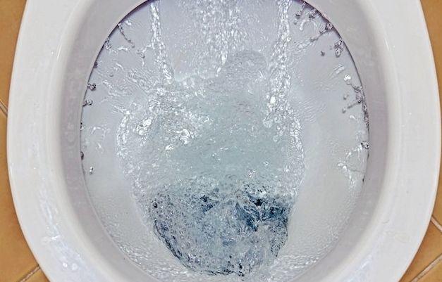 Đừng nên trải giấy vệ sinh lên bồn cầu cho sạch, bạn đang ngồi lên nhiều vi khuẩn hơn nữa đấy - Ảnh 3.