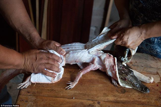 Đằng sau những đôi giày da thời thượng là cả một quá trình lột da cá sấu sống rùng rợn - Ảnh 4.