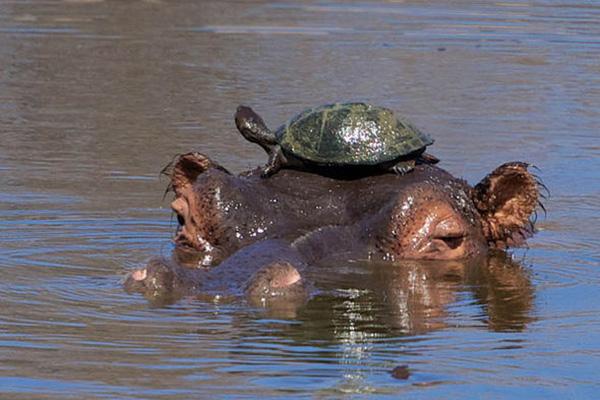 5 bật mí trớ trêu về chuyện đi cầu trong thế giới động vật - Ảnh 4.