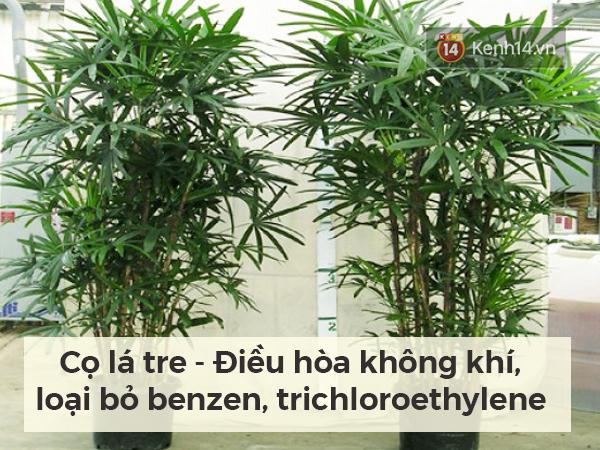 Lọc sạch không khí quanh bạn bằng những loại cây cảnh dễ tìm - Ảnh 5.