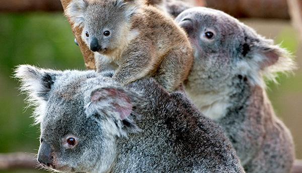 5 bật mí trớ trêu về chuyện đi cầu trong thế giới động vật - Ảnh 7.