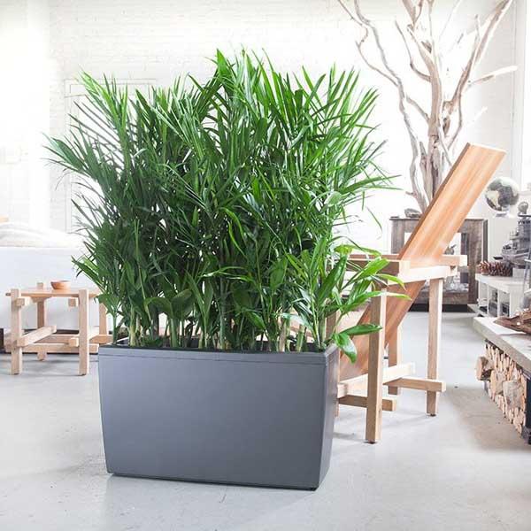 7 loại cây lọc thanh không khí nên trồng trong nhà để hỗ trợ sức khỏe - Ảnh 8.