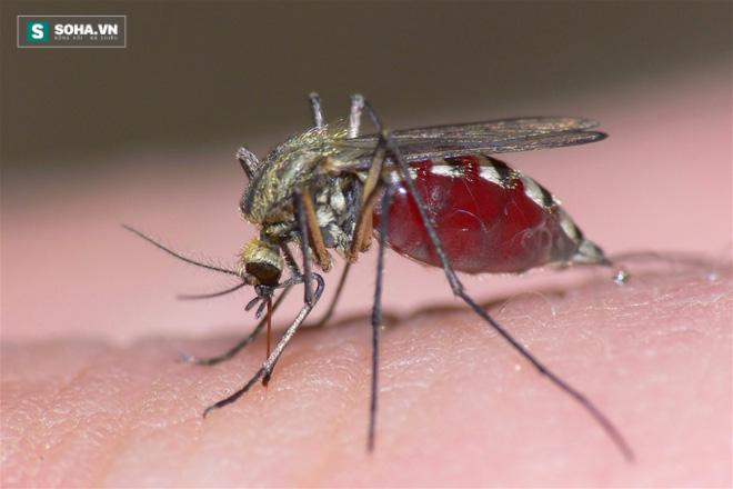 Tại sao bị muỗi đốt lại hay ngứa ngáy, sưng to? - Ảnh 1.