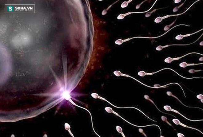 6 lợi ích bất ngờ của tinh trùng - Ảnh 1.