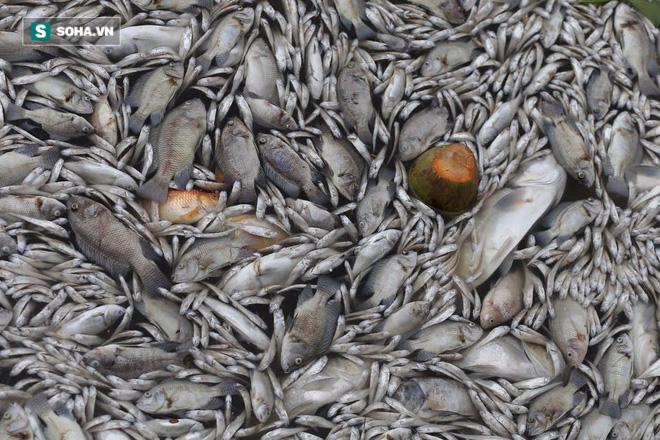 [ẢNH] Cảnh vớt cá chết nổi trắng chưa từng có ở Hồ Tây - Ảnh 3.