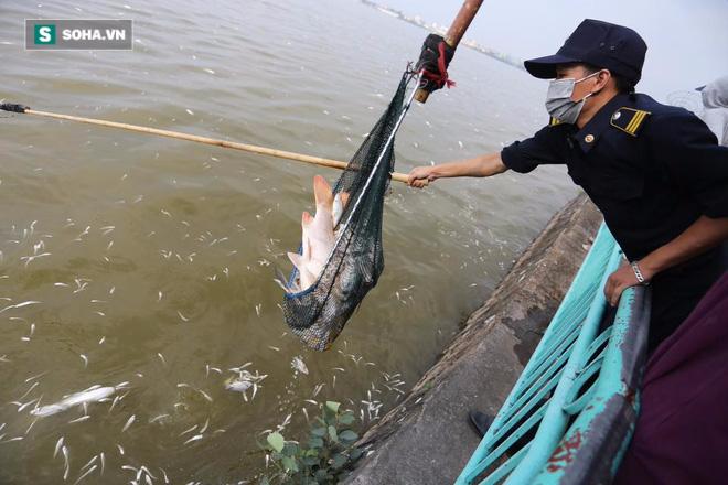 [ẢNH] Cảnh vớt cá chết nổi trắng chưa từng có ở Hồ Tây - Ảnh 4.