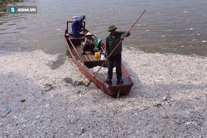 [ẢNH] Cảnh vớt cá chết nổi trắng chưa từng có ở Hồ Tây - Ảnh 7.