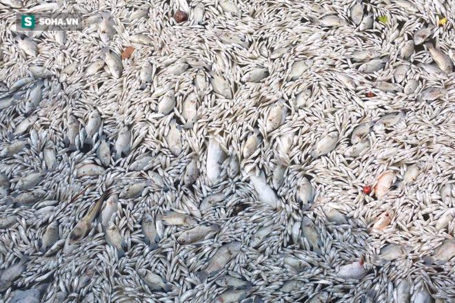 [ẢNH] Cảnh vớt cá chết nổi trắng chưa từng có ở Hồ Tây - Ảnh 2.